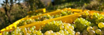 Professionnels du vin, découvrez une solution tout-en-un